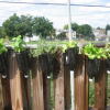 Thumbnail image for Urban Gardening in Washington DC
