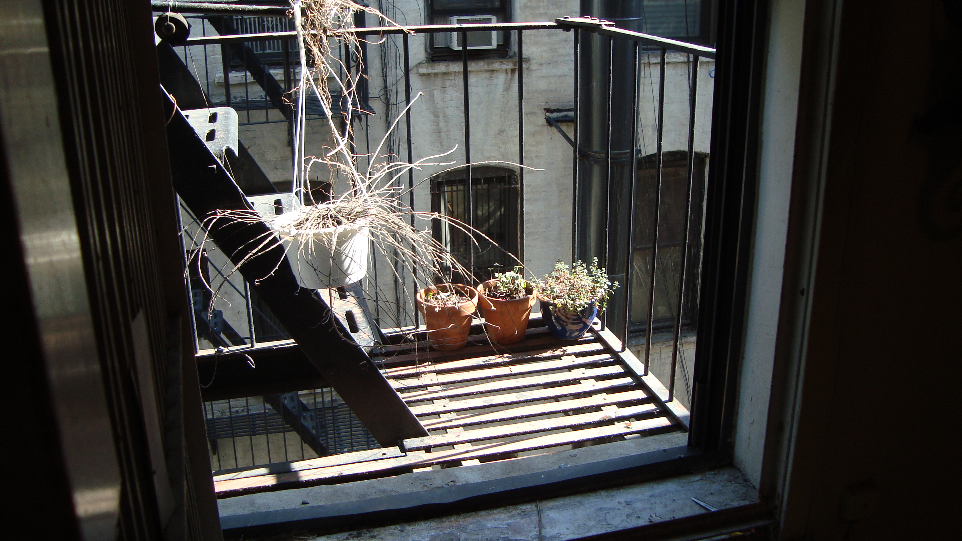 Vegetable gardening in small spaces. My fire escape.