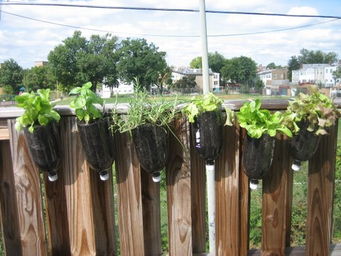 Post image for Urban Gardening in Washington DC