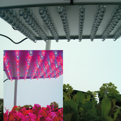 the newest type of grow lights use led technology