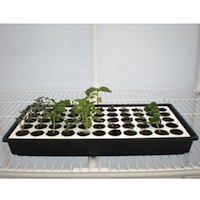 Thumbnail image for Buying a Seed Starting Tray: 5 Things to Look For