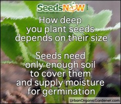 Thumbnail image for Simple Rules for Starting Your Seeds