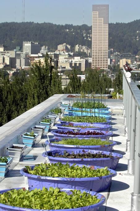 Captivating Urban Organic Gardener