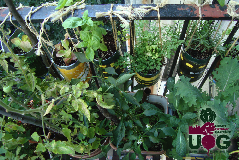 ... of Starting an Apartment Vegetable Garden - Urban Organic Gardener