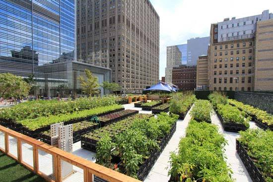 New York S Riverpark Farm Urban Organic Gardener