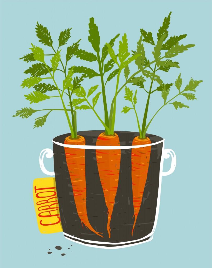 fall u0026 winter urban organic gardener