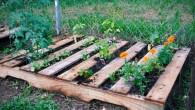 pallet-garden-e1382450563458