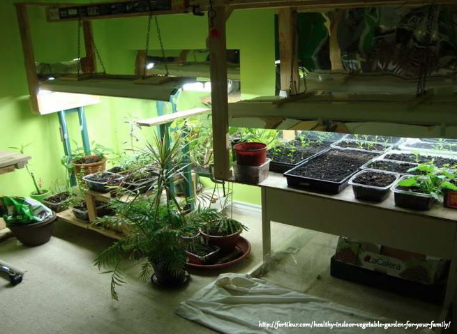How to select the best grow light for indoor growing for Indoor gardening lighting guide
