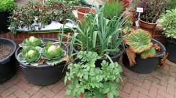 veggiespots2