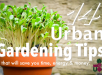 14 Urban Gardening Tips