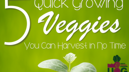 5 Quick Growing Vegetables