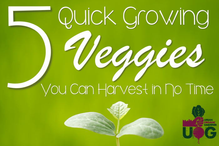 5 Quick Growing Vegetables