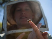Alyssa Anderson, daughter of a beekeeper, holds a baby bee in a California orchard. Chris Jordan-Bloch / Earthjustice