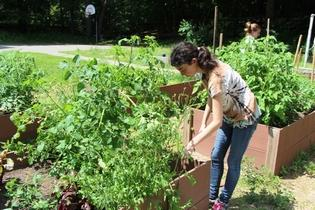 Students at the Ivy Street School, which serves teens and adolescents with autism spectrum disorder, brain injury, and other mental health diagnoses, are enjoying a unique feature of the school: an urban garden.