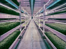 3051209-slide-s-2-this-london-underground-farm-grows