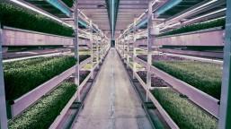 3051209-slide-s-2-this-london-underground-farm-grows