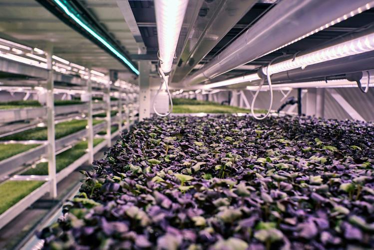 3051209-slide-s-5-this-london-underground-farm-grows