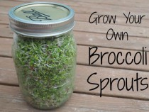 Grow-Your-Own-Broccoli-Sprouts-Horizontal