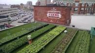 fenway-farms-may-11-1024x577