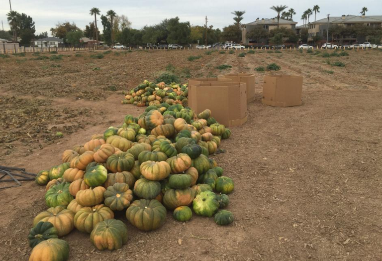 The Impacts Of Increased Urban Farming In Phoenix Urban