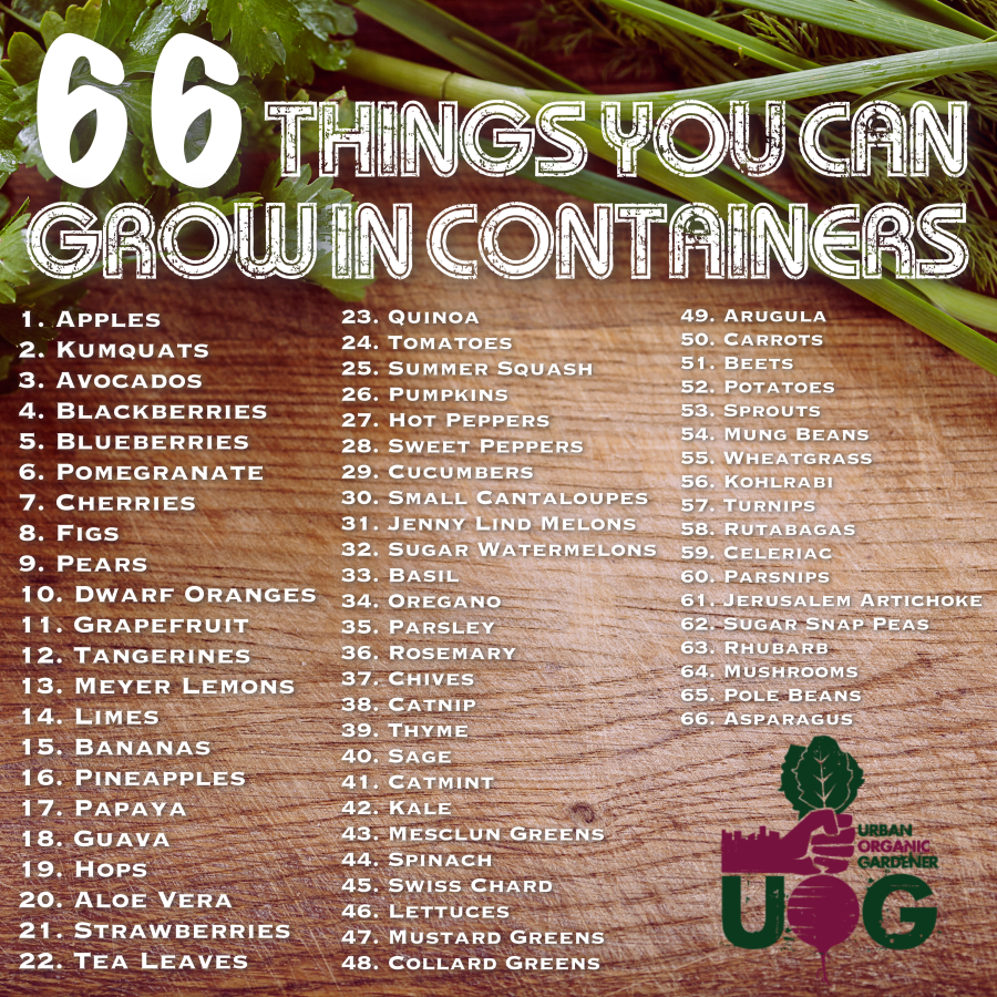 66thingsyoucangrowincontainers