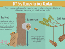 bee-friendly-garden-02