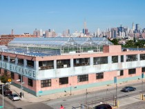 greenhouse_greenpoint