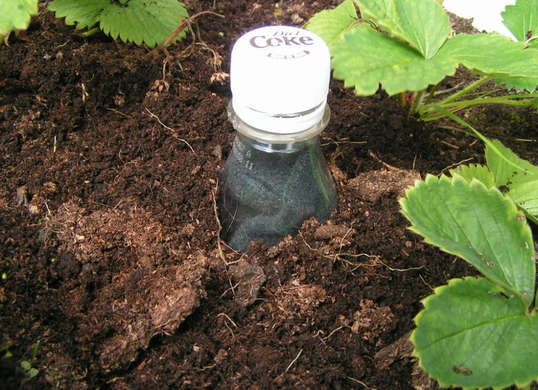 Bury_Plastic_bottle_For_Drip_Irrigation