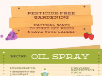 Natural Pest Spray for the Garden