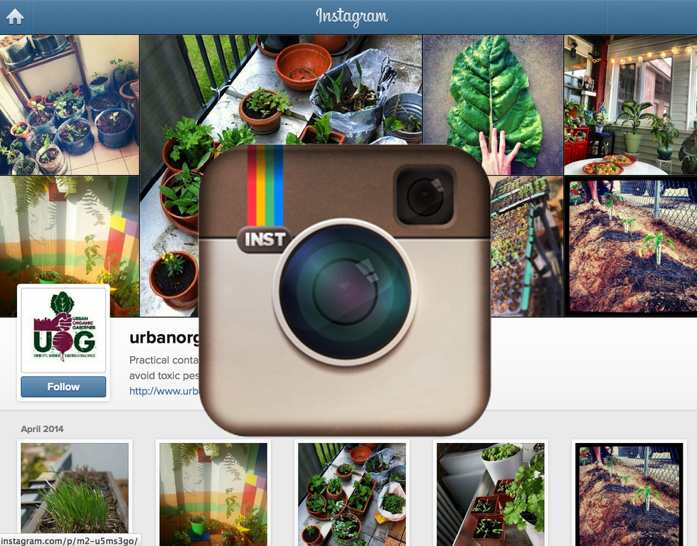 10 Urban Gardeners You Should Follow On Instagram Urban