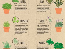 easiest_herbs_to_grow_Indoors