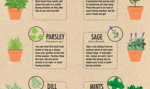 easiest_herbs_to_grow_Indoors