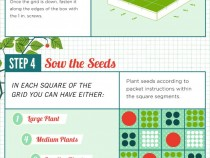 square_foot_gardening_organic_seeds
