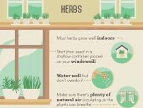 herbs-002