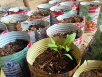 Syrians-under-siege-plant-urban-gardens-to-grow-food