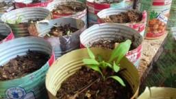Syrians-under-siege-plant-urban-gardens-to-grow-food