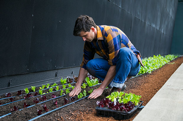 New Urban Garden Brings Increased Sustainability To Safeco