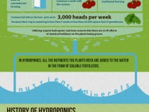 Pros-and-Cons-of-hydroponic-farming