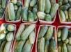cucumber-1630009-639x504