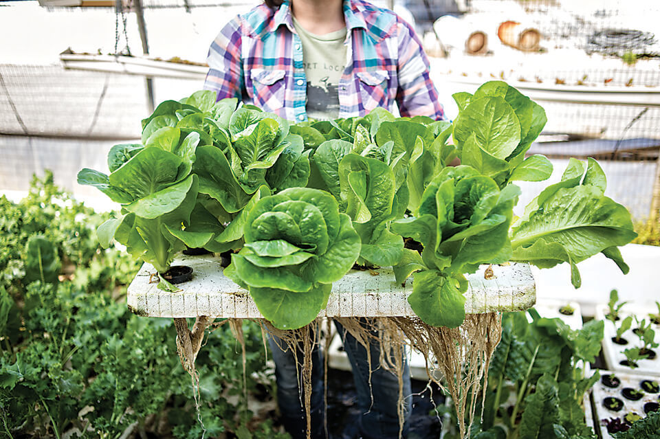 Urban Farming Takes Root In Baltimore Urban Organic Gardener