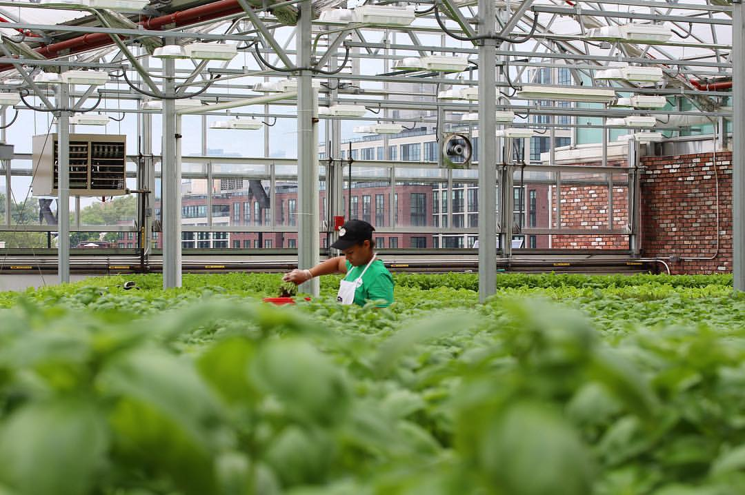 Brooklyn S Rooftop Farming Industry Is Booming Urban