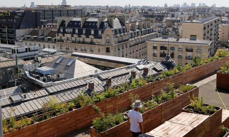A man walks between planter boxes on the 700 square metre (7500 square feet) rooftop of the Bon Marche, where the store's employees grow some 60 kinds of fruits and vegetables such as strawberries, zucchinis, mint and other herbs in their urban garden with a view of the capital in Paris, France, August 26, 2016.  REUTERS/Regis Duvignau
