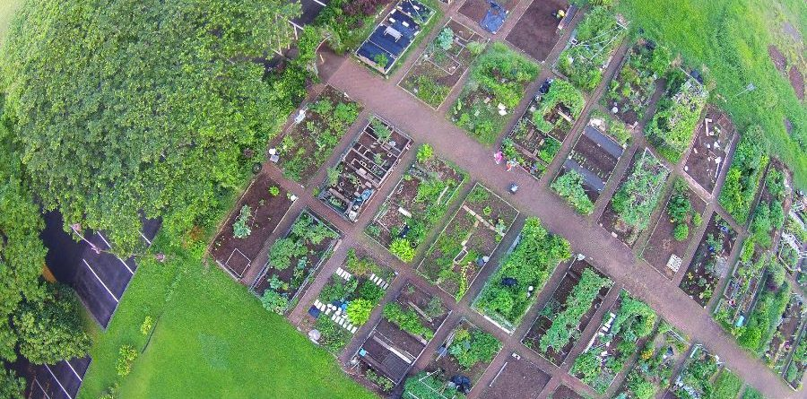 5 Reasons Why Community Gardens Are Good For Your