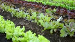 organic-vegetable-garden-1319014