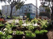 freeway_food_forest_at_hayes_valley_farm