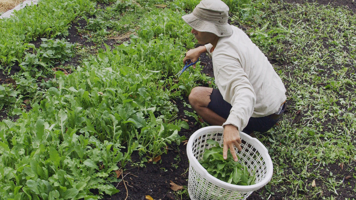 Fyi S Farming Detroit Documentary Highlights The Urban