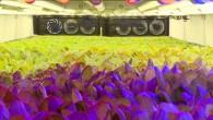 vertical-farms-1