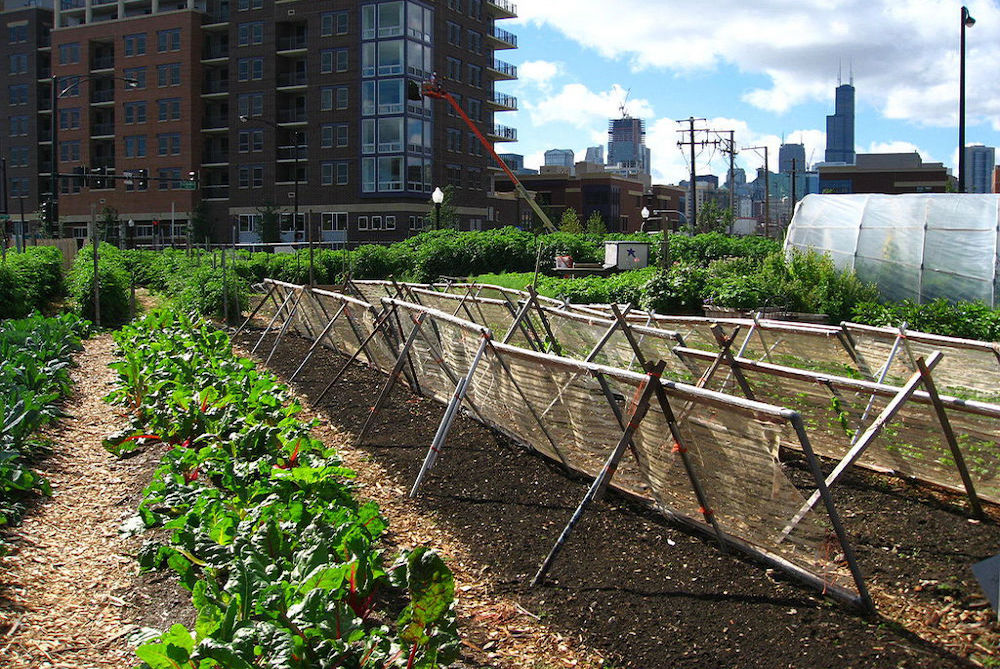 New_crops-Chicago_urban_farm-1