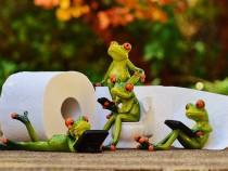 frog-1037253_960_720