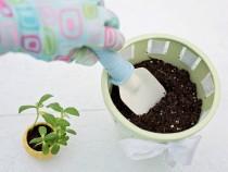 planting-783342_960_720-1